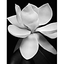 Printed Art Floral Magnolia by Michael Harrison
